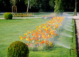 Modern automatic sprinkler irrigation system working early in the morning in green park - watering lawn and colourful flowers tulips narcissus and other types of spring flowers - 145020877