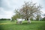 groupe de chevaux en liberté dans une prairie