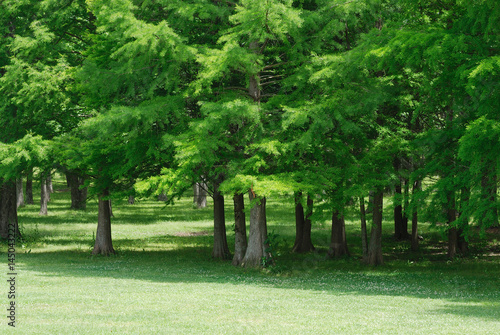 green trees forest and meadow in spring season