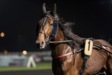 course de chevaux - 145044807
