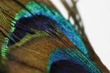 Pfauenfeder Struktur / Textur / Details - Marko Aufnahme