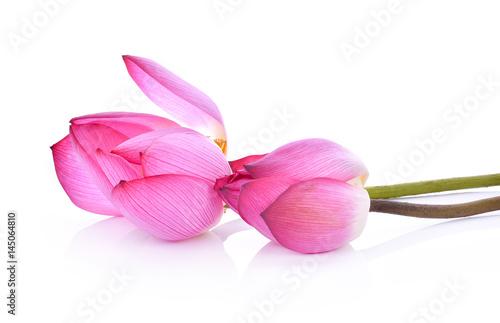 lotus on white background Poster