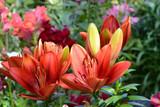 Blumen 771