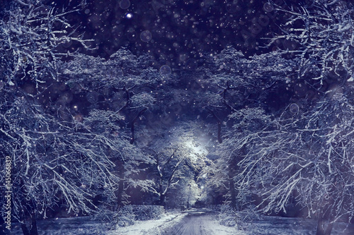 Foto op Canvas Aubergine winter night in the park