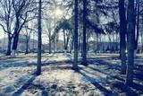 cool blue spring landscape trees nature background eco