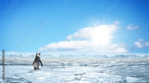 Canvas Pinguin #011804732