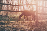 Horse in the rays of sunset
