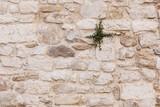 antikes Mauerwerk mit Pflanze