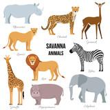 African animals of savanna elephant, rhino, giraffe, cheetah, zebra lion hippo isolated Vector illustration - 145113694
