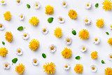 Daisy and dandelion pattern. Flat lay spring and summer flowers with green leaf on a white background. Repeat concept. Top view