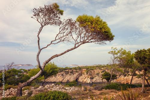 Landscape near Cala Vadella, Ibiza, Spain