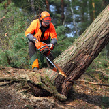 The Lumberjack working in a forest. Harvest of timber. Firewood as a renewable energy source. Agriculture and forestry theme. People at work.  - 145147688