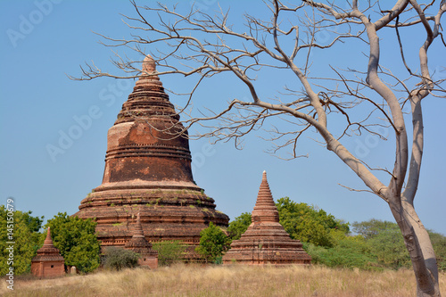 Beautiful ancient stupa with picturesque tree on the foreground
