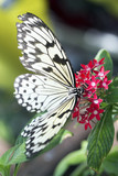 Closed up Butterfly on flower -Blur flower background