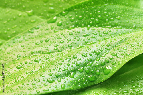 green plant leaf with water drops Poster