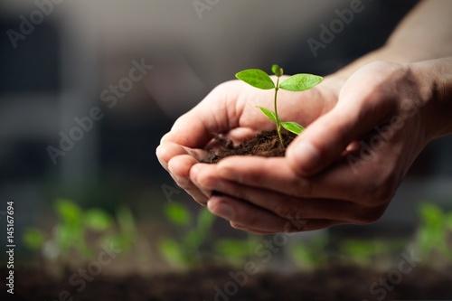 Plant. - 145167694