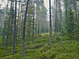 Wald Herbst Durchblick