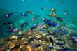 Quadro Underwater world of Lake Malawi - Malawi