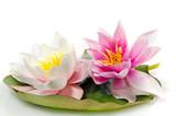 Auszeit, Entspannung, Meditation: Seerosen auf Seerosenblatt vor weißem Hintergrund :) - 145241056