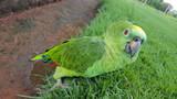 Neugieriger Papagei