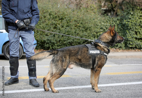 Poster German shepherd police dog while patrolling the city streets