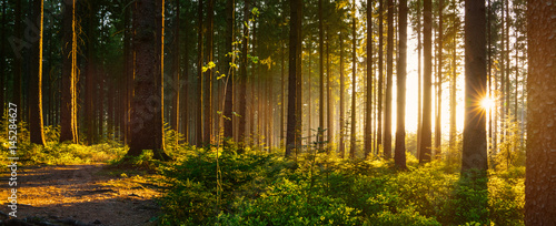 Fototapety, obrazy : Silent Forest in spring with beautiful bright sun rays