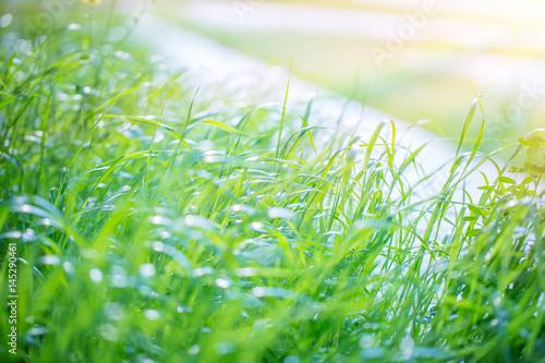 Frischer Hintergrund des grünen Grases