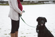 Pregnant woman with the dog