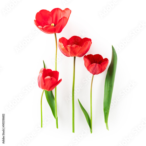 Plakat Red tulip flowers