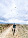 bird battlefield. horseback riding in Iceland is tricky with aggressive Arctic terns on attack.