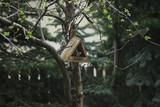 wiosna w Polsce - ptaki w karmniku