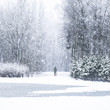 girl walking the dog in snow in winter forest