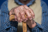 Old Man Hands with cane - 145374283