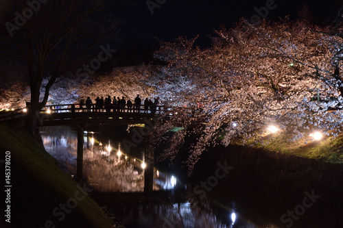 Poster Cherry blossoms in Matsumoto castle light up
