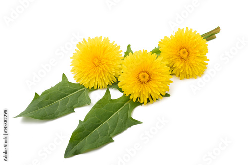 dandelion  flowers and leaves