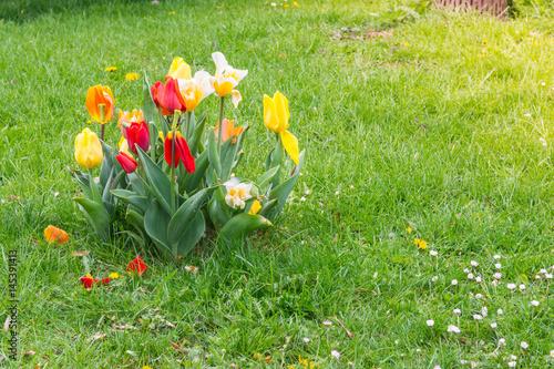 Blumenblätter, die weg von den bunten einzelnen Blumen auf grünem Gras im Park-Tageswarm fallen