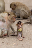 Baby monkey enjoy food