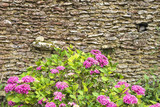 old stone wall of house with hydrangea flowers in front