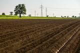 Strommasten hinter Kartoffelfeld