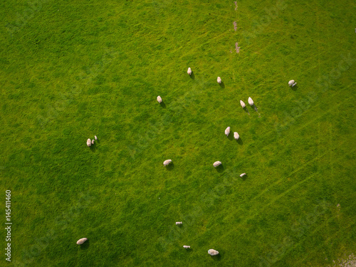 Herd Of Sheep in green field Aerial