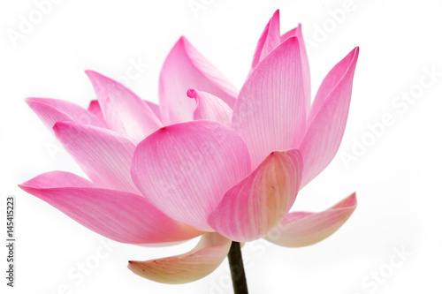 lotus flower isolated on white background. Poster