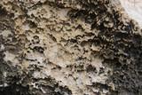 stone texture, Porous