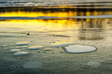 Water Lilies In Ice