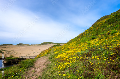 Plakat California coast landscape with wildflowers and sand dunes