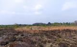 mare de platière en forêt de Fontainebleau