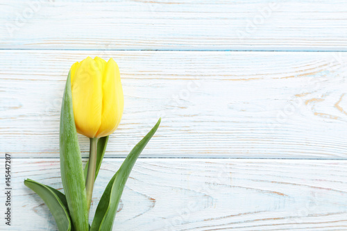 Yellow tulip on the white wooden table