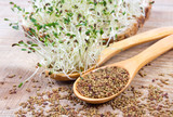Fresh alfalfa sprouts and seeds - closeup. - 145448217