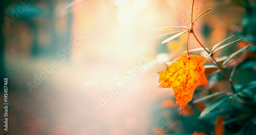 Beautiful leaves in autumn garden or park, fall nature background, banner