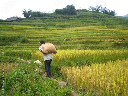Tuinposter Rijstvelden Récolte traditionnelle du riz au Vietnam