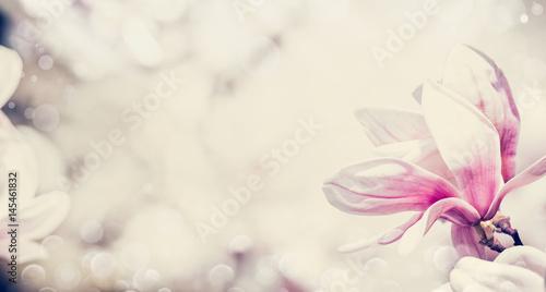 Close up of pink magnolia flowers, floral border, pastel color